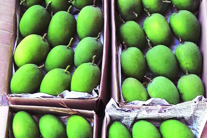 Alphonso mango, record break price, Mahrashtra, Hapus, हापूस आंबा, Loksatta, Loksatta news, Marathi, Marathi news
