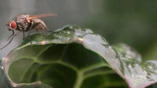 How to Get Rid of House Flies at Home During Rains