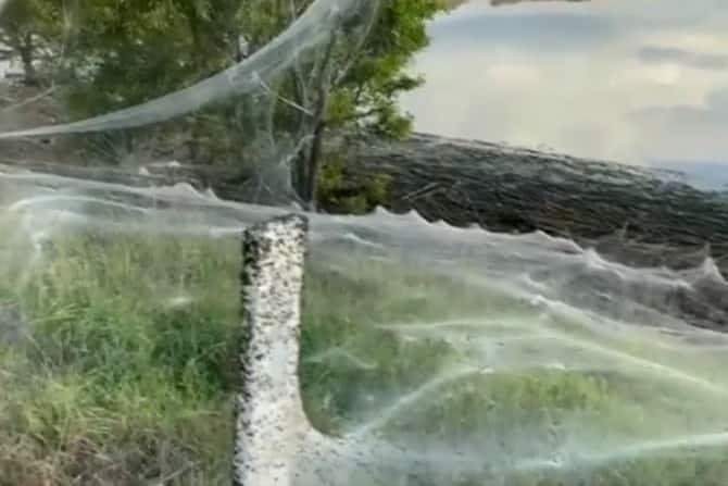massive spider webs in Australia