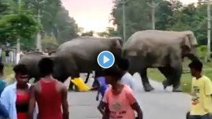 Man crushed by an elephant incident happened after being teased for no reason Video goes viral gst 97