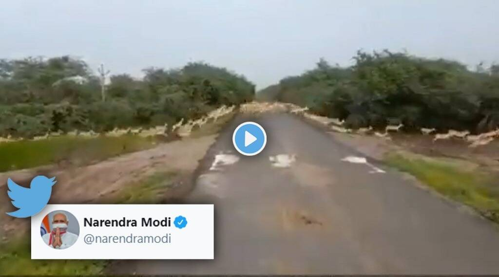 PM Modi shared video of thousands of Blackbucks See this awesome view gst 97