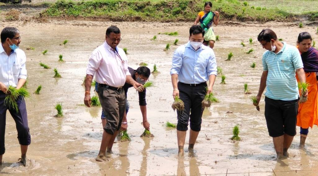 Gadchiroli-District Collector planted paddy in the field