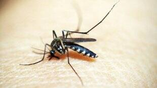 diet-for-dengue-and-malaria