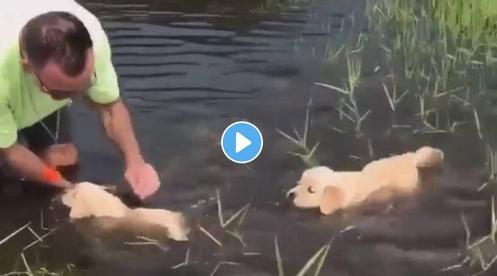 puppies are learning how to swim