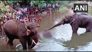 Kerala-Pregnant-elephant-dies-after-being-fed-pineapple-stuffed-with-crackers