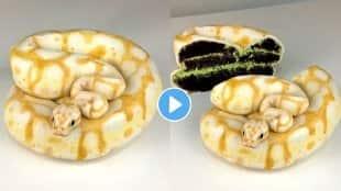 snake-cake-viral-video